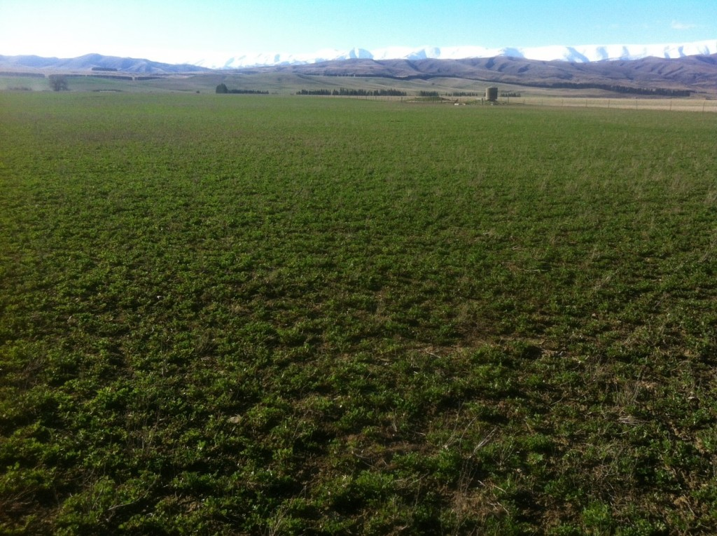 cycling central otago day 10 cycling