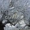 otago winter
